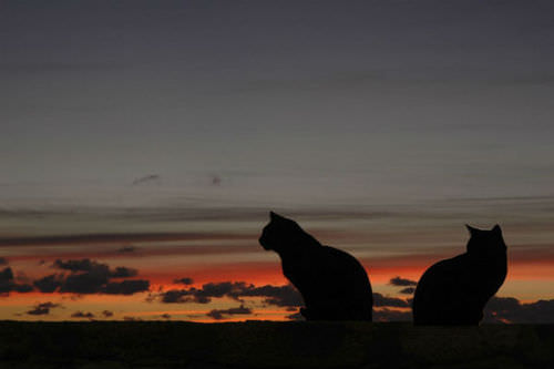 cats silhouetted against an orange sky