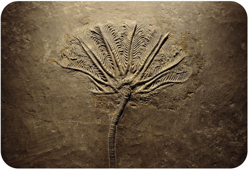 how can fossil and rock data determine when an organism lived answer key
