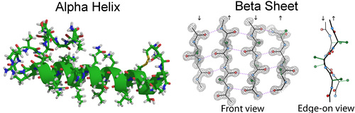 Structure of alpha helices and beta sheets
