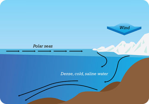 Deep currents flow because of differences in density of ocean water