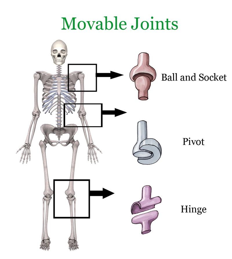 Joints Ck 12 Foundation
