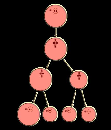 A mature egg cell