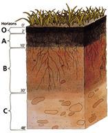 Diagram of the soil horizons