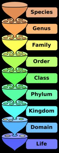 The Linnaean System - Advanced | CK-12 Foundation