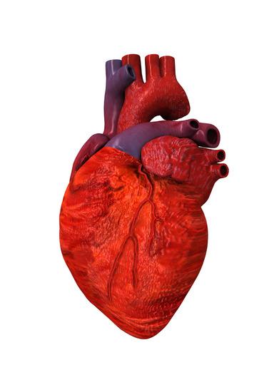 Músculos Lisos, Esqueléticos y Cardiacos | CK-12 Foundation