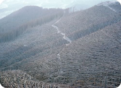 Trees knocked down by Mount St. Helens eruption