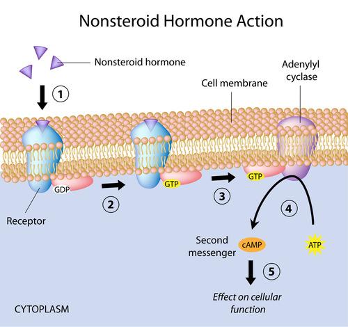 Signal Transduction Read Biology Ck 12 Foundation