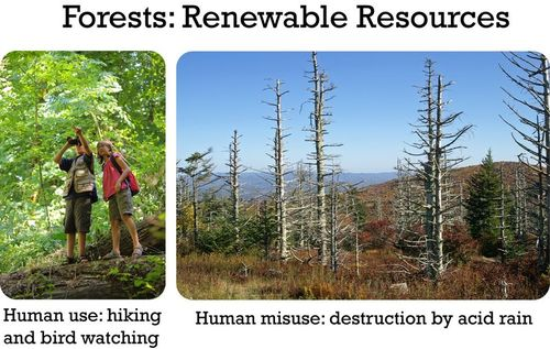 People hiking in a forest, and a forest destroyed by human acid rain