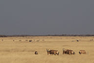 Africa is famous for its grasslands and their wildlife