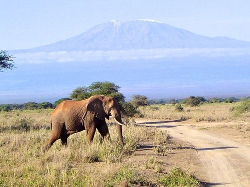 Mount Kilimanjaro has very different climates at the top and bottom