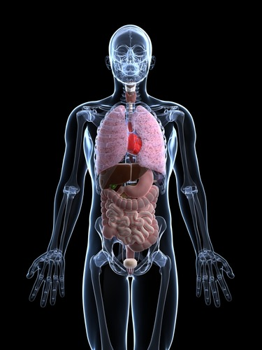System Interactions in the Human Body - Advanced