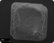 Salt crystals are cubic in shape
