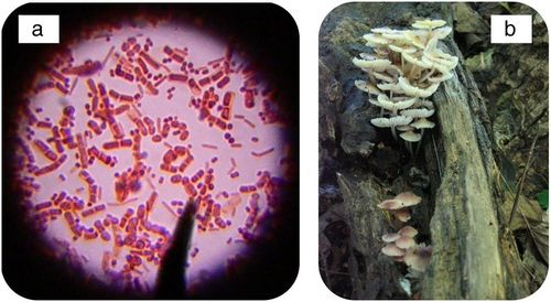 Bacteria and fungi are often decomposers