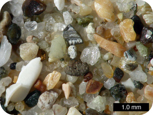 Quartz, rock fragments, and shell make up the sand along a beach
