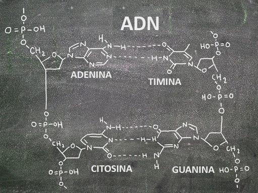 Estructura Y Replicación Del Adn Ck 12 Foundation