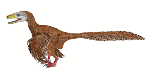 Deinonychus illustration: extinct bird relative