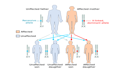 The Inheritance of Sex-linked Traits - Color Blindness