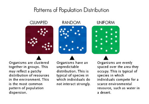Population Size, Density, and Distribution ( Read ) | Biology | CK ...