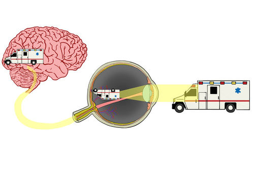 Signal transmission from eyes to brain