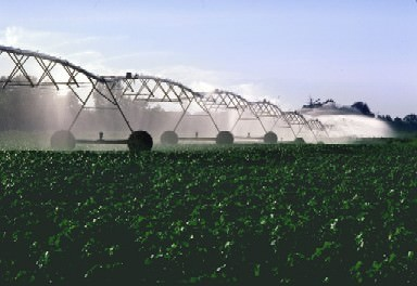 An irrigation system waters growing cotton plants.