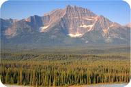 A conifer forest in Jasper National Park, Alberta, Canada