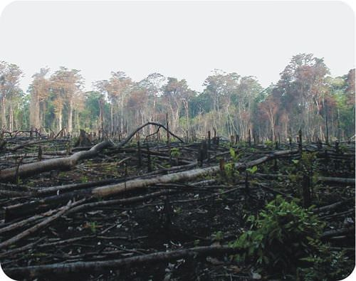 Deforestation creates significant increases in carbon dioxide levels around the world