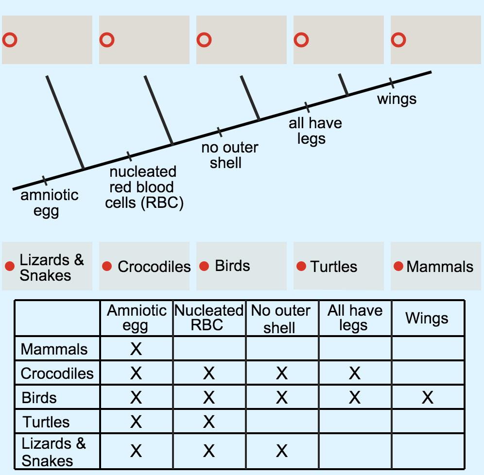 Phylogeny and Cladistics   CK-12 Foundation
