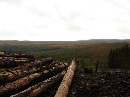 Logging exposes large areas of land to erosion