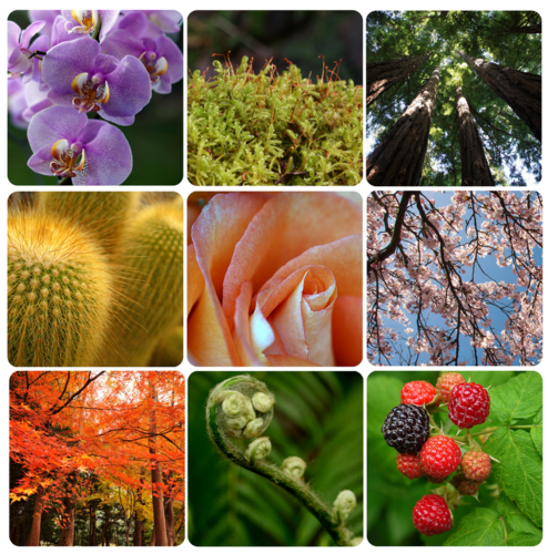 Diversity of plants in the plant kingdom