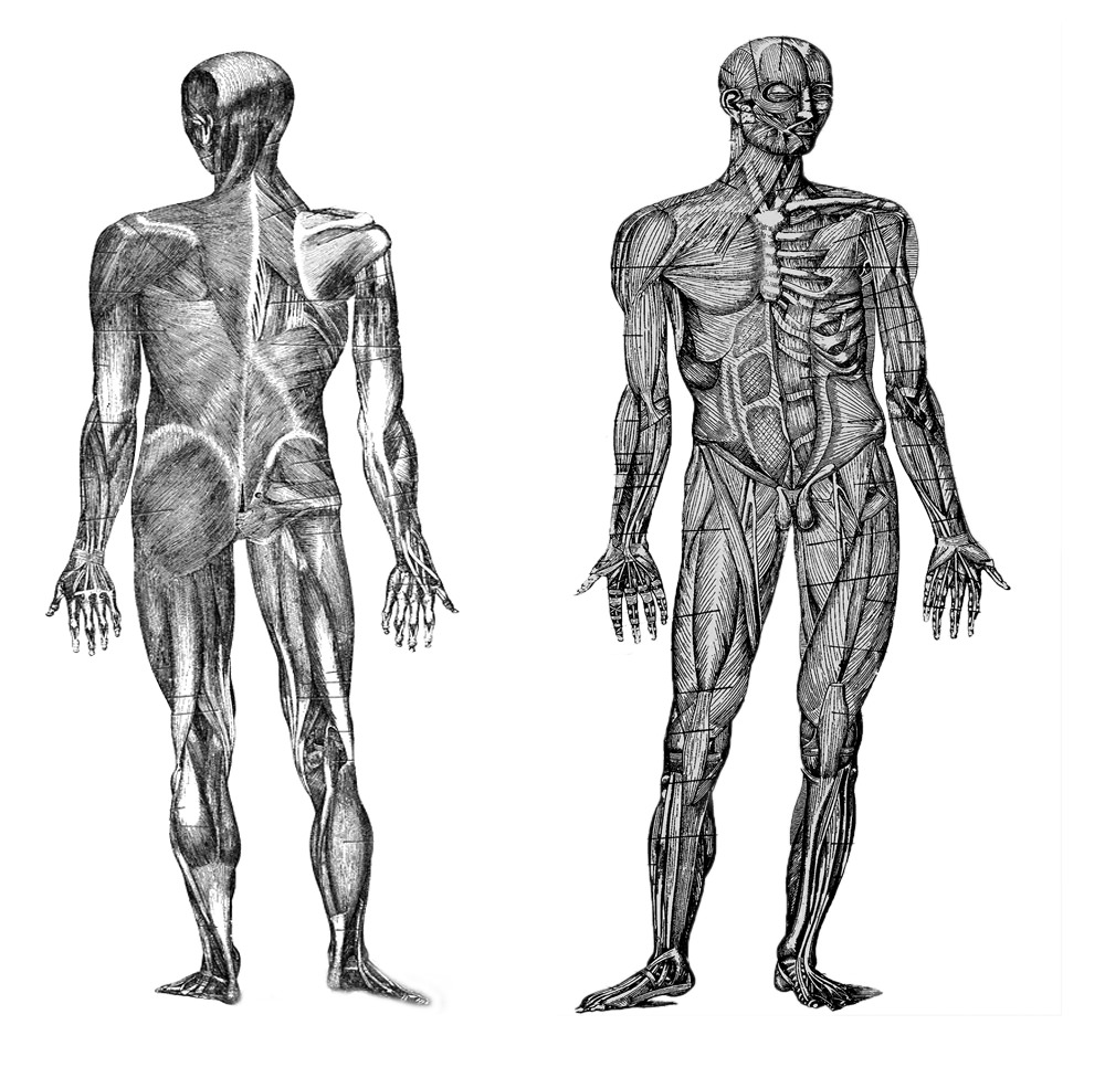 Human Biology | CK-12 Foundation