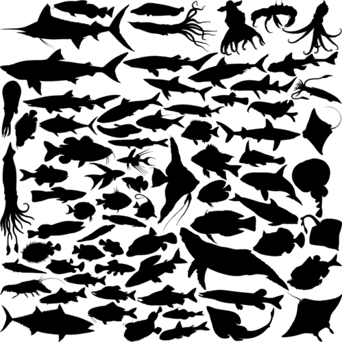 Types of Marine Organisms