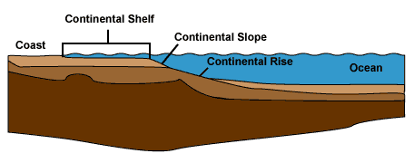 The continental margin includes the continental shelf, slope, and rise