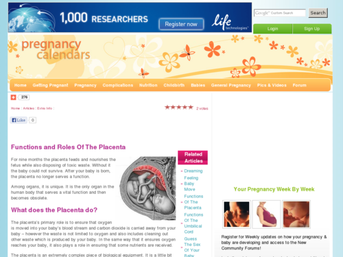 Functions and Roles Of The Placenta