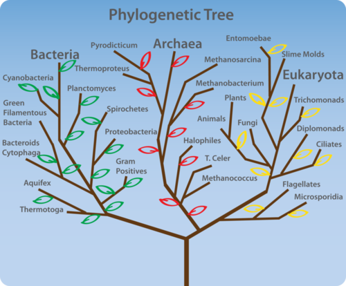 The three domains of organisms that live on Earth