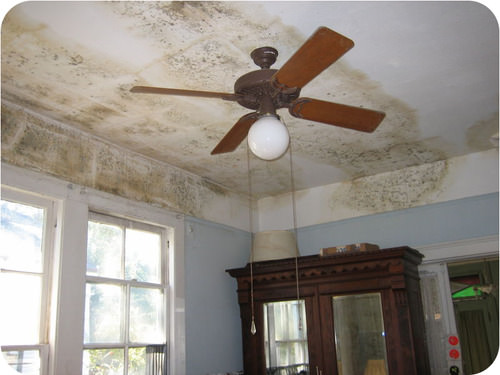 Indoor mold can be harmful to human health