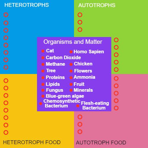 Autotroph Heterotroph Concept Sort