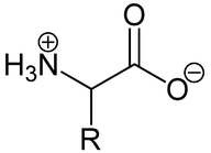 The general structure of an amino acid
