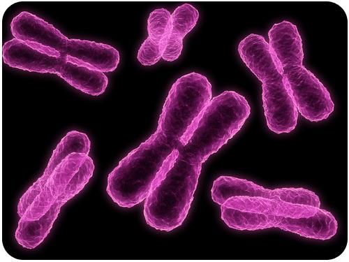 chromosomes read biology ck 12 foundation
