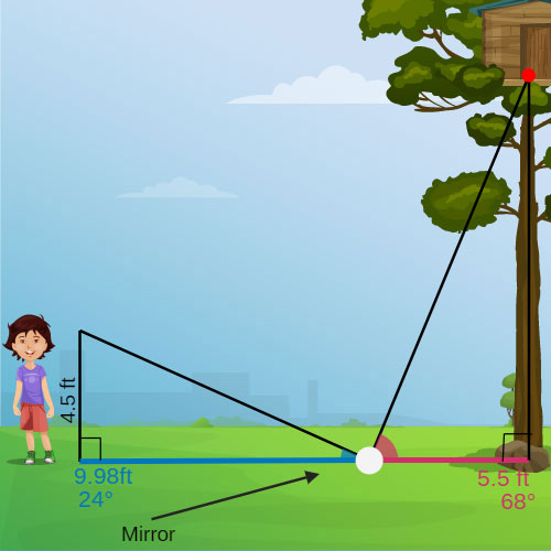 Image result for measuring a tree with no ruler and a mirror