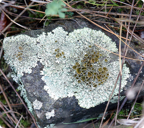mutualistic relationship with lichen