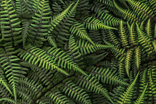 Ferns - Advanced