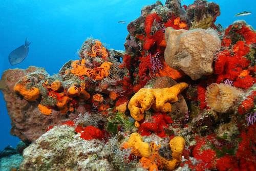Sponge Ecology - Advanced