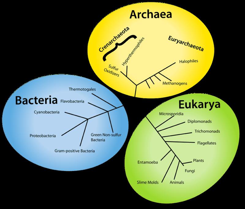three domains of life - Khafre
