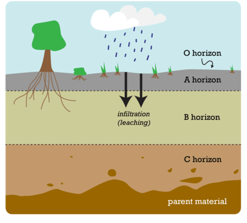 This image shows the various soil horizons