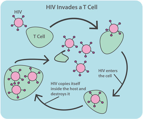 HIV mechanism for destroying T cells