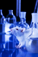 Do Lab Rats Still Have A Use?