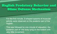 Hagfish Predatory Behavior and Slime Defense Mechanism