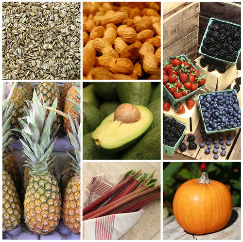 Seeds and Fruits ( Read ) | Biology | CK-12 Foundation