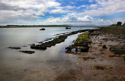 Low tide reveals oyster beds at a farm in Ireland