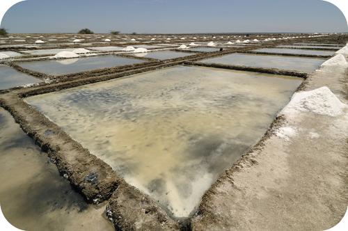 Salt is formed from evaporating saltwater